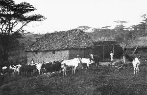 Farma Lányovců, Maranga Afrika